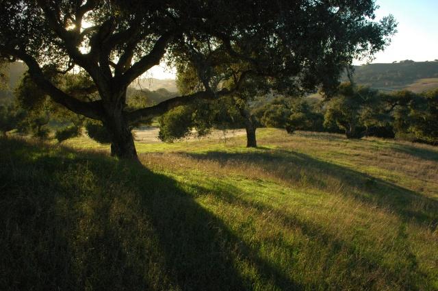 Santa Ynez, Calilfornia (photo credit: Todd Anderson)
